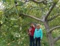 Apple Farm 2